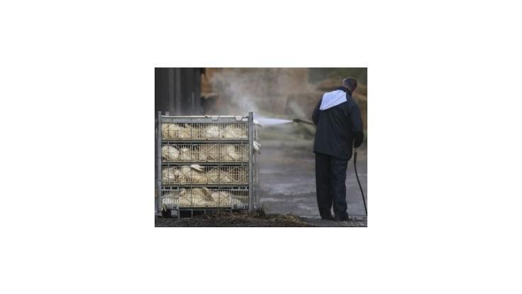 Vtáčiu chrípku zistili už na tretej farme v Holandsku