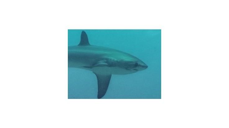 Vedcom sa podarilo urobiť unikátnu fotku z pôrodu žraloka