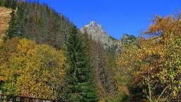 Tatranský národný park ukrýva najvzácnejšiu hubu sveta