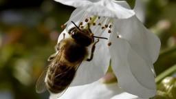 V okolí vodojemov začali chovať včely, tie sú súčasťou experimentu
