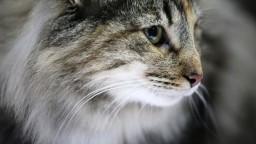 Na taiwanskom letisku uhynuli desiatky zvierat. Od vyčerpania