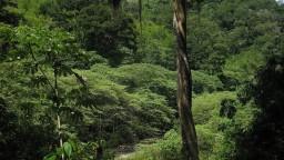 Havária ropovodu znečistila prales v Peru, už štvrtý raz tento rok