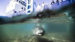 V Austrálii lákajú turistov na odvážne fotografie s veľkým žralokom