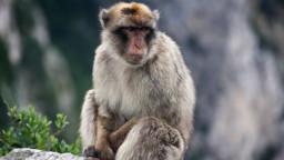 Opice v Japonsku sa pokúšajú o nemožný sex, zistili vedci