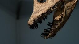 Ukázali, ako v tme a zime vyhynuli dinosaury a morské plazy