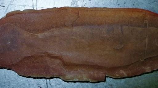 tullimonstrum-gregarium-fosilia_0a000002-485d-7c2e.jpg