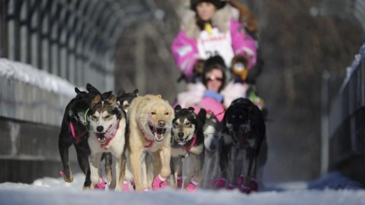 iditarod-sled-dog-race-10985-22aa74cd3d0c481da37aa228b266a392_0a000002-451c-6212.jpg