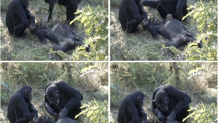 simpanzy-stvorkombo_0a000002-af7c-875a.jpg