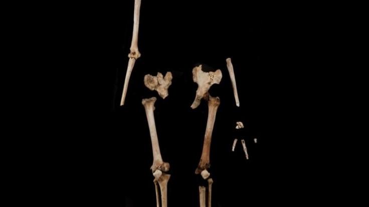 flores-floresiensis-lb1-skeleton_0a000002-173f-cb8f.jpg