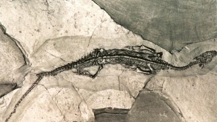 pachypleurosaurus_7f000001-5e22-1231.jpg