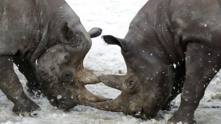 aptopix-czech-republic-rhinoceros-86829-73eee902fe7644dc84812ed531d17dc7_7f000001-0879-5230.jpg