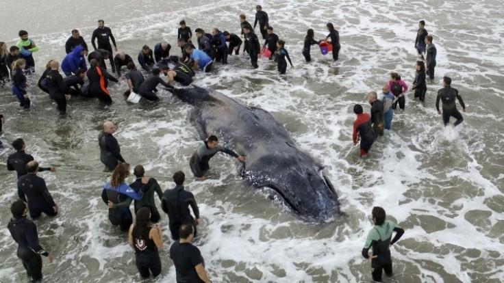 argentina-humpback-whale-09296-15bd854a533845ae910fe5c5e0160ff0_7f000001-aa65-1f5c.jpg