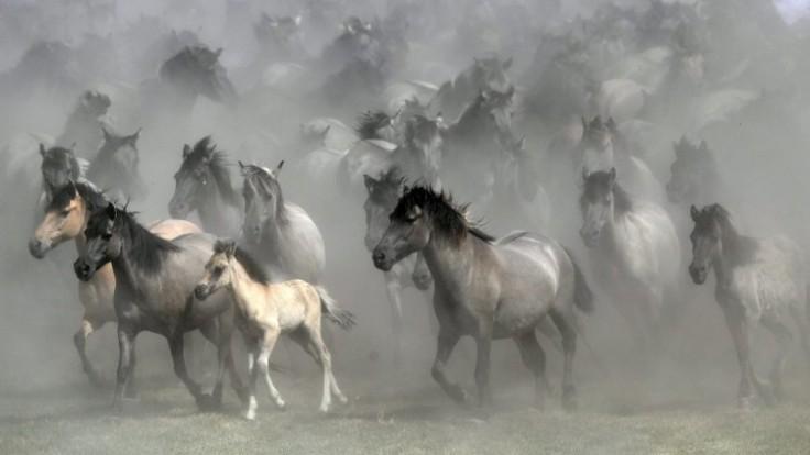 aptopix-germany-wild-horses-photo-gallery-46850-d53b85e6ab8c420a97c6fe79fdd4ab0f_7f000001-5ff1-ee8f.jpg