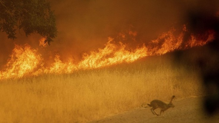 california-wildfires-37281-95c68efa37b9458ab8abb66f8458705d_7f000001-1ab2-2e09.jpg