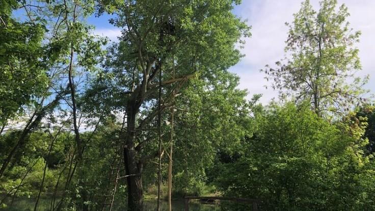 Rebrík do koruny stromu pre odvážlivcov. Zdroj: CK SATUR