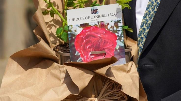Vyšľachtenú ružu pomenovali po princovi  Philipovi.
