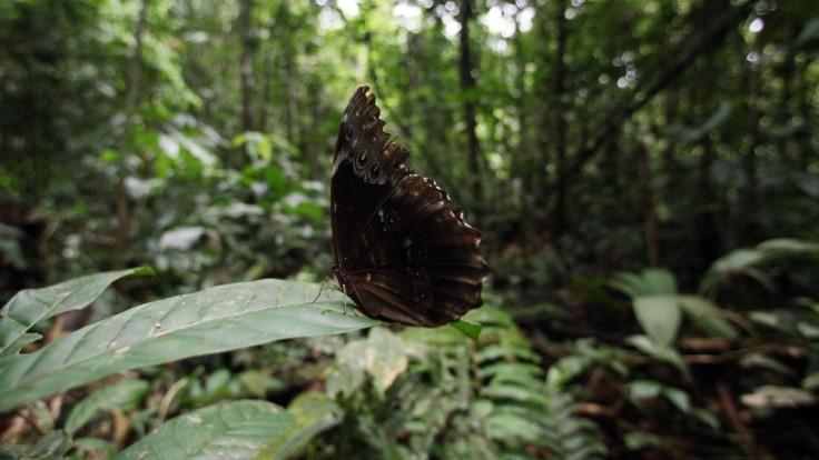 Ekvádorská Amazónia bola kedysi nedotknutou prírodou. Dnes jej hovoria aj Amazonský Černobyľ.