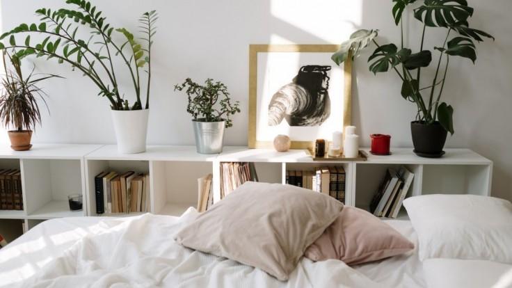 Rastliny v spálni
