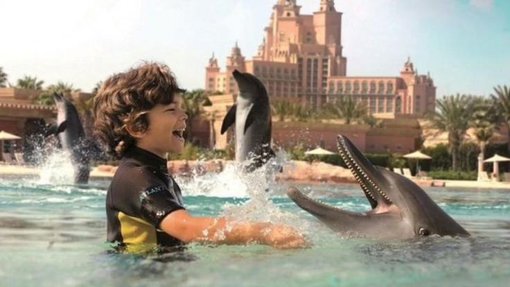 Plávanie s delfínmi.