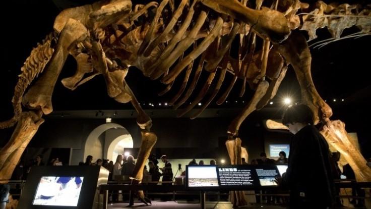 huge-dino-exhibition-7c35506af57d414aadea0670de61134c_0a000002-ea2f-c54a.jpeg